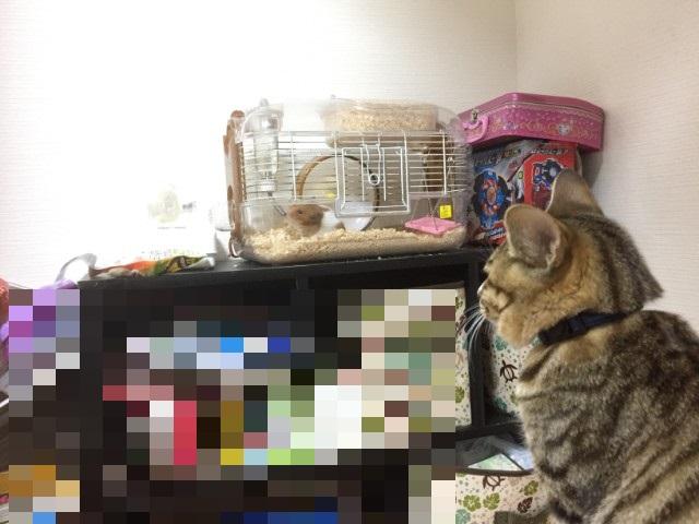 猫がハムスターを殺した