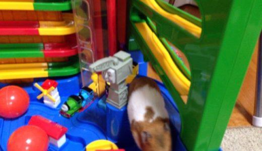 おもちゃで遊んでいるハムスターが可愛くてたまらない!