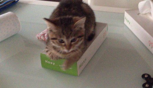 ネコがゴミ捨て場に捨てられてたから拾ってみた【ネコ画像あり】