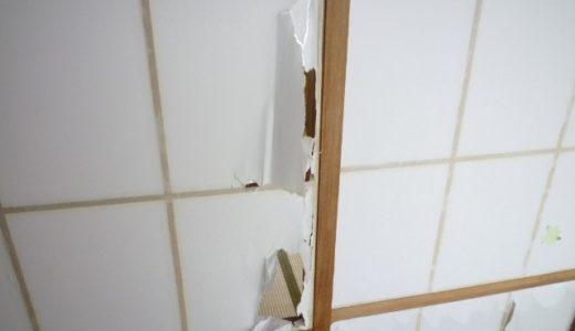 ネコが和室の障子に穴をあけてボロボロにしました…【ネコ画像】